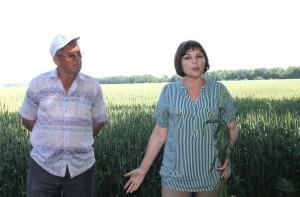 Инна Герасименко рассказала участникам объезда полей о качестве высеваемых семян на полях Брюховецкого района