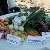 КФХ Плетинь Р.Б. представило свою овощеводческую продукцию