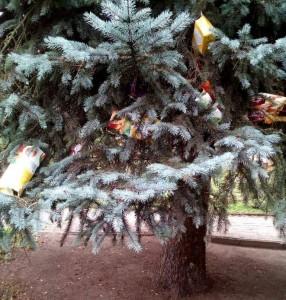 Мусор в Брюховецком парке
