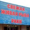 zhivaya-ryba-bryuhovetskaya